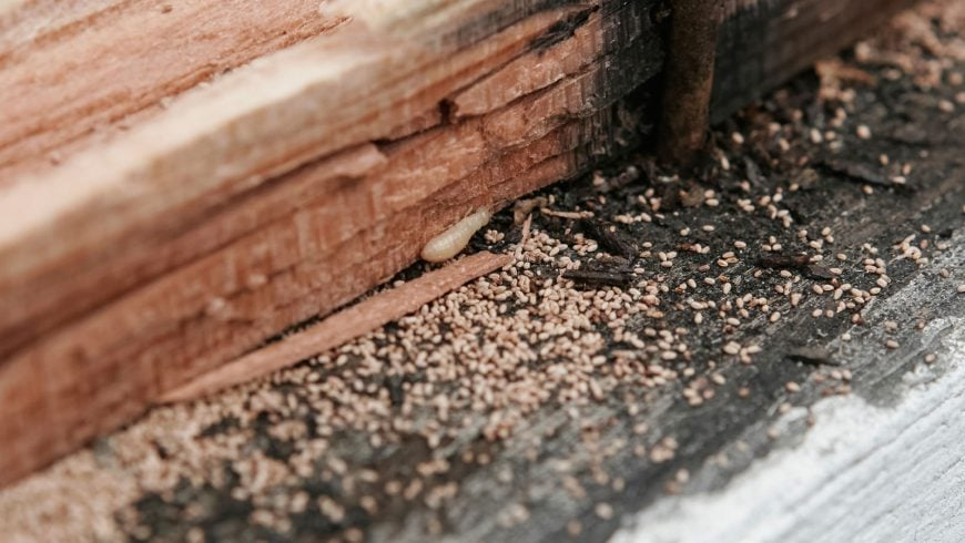 Pre-Construction Termite Treatment Procedure
