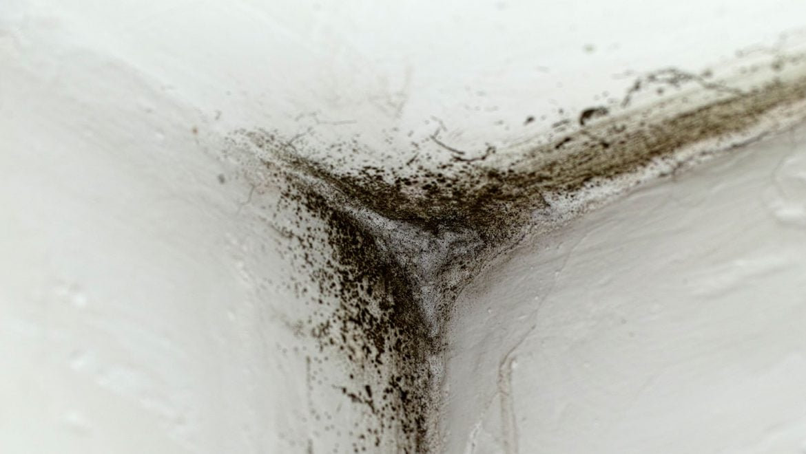 Prevent the Costly Damage and Liability of Mold