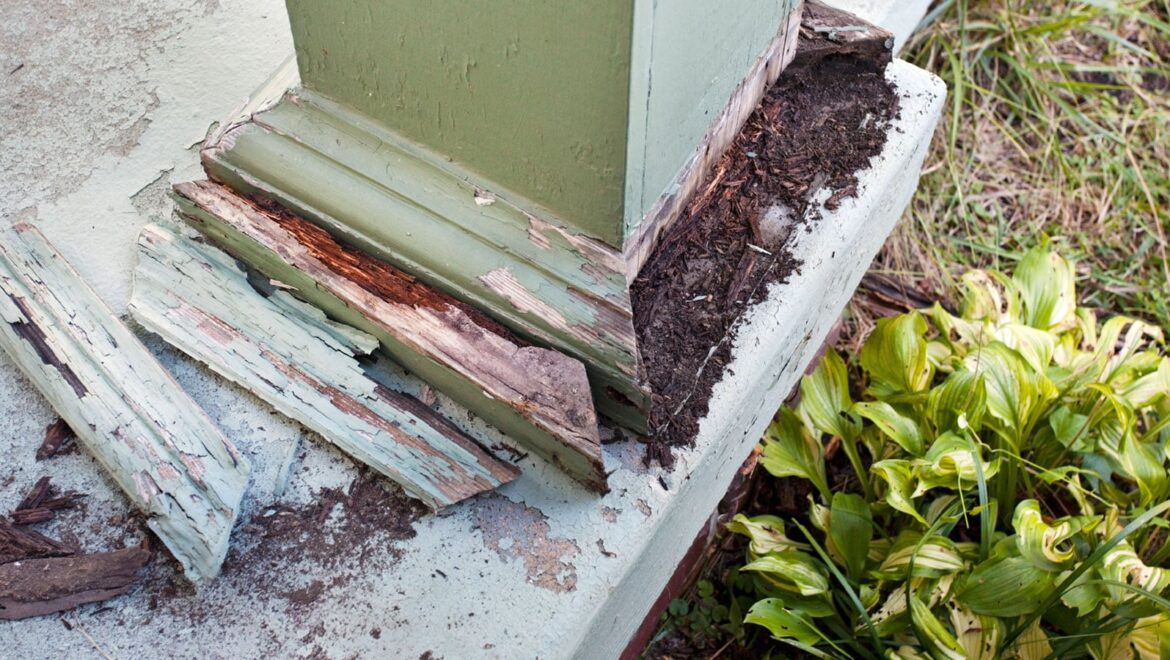 Florida Termite Pretreat FAQ