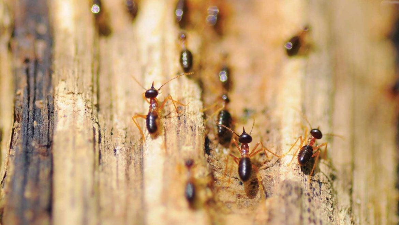 6 Easy Ways To Prevent Termites