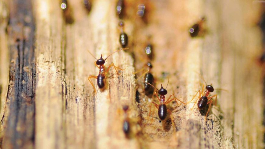 6 Easy Ways To Prevent Termites