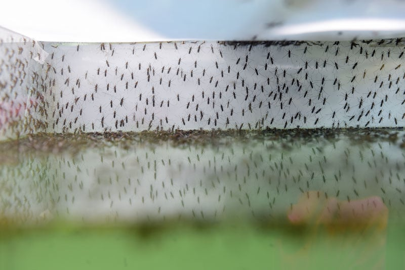 Tips to protect homewners from Mosquitoes